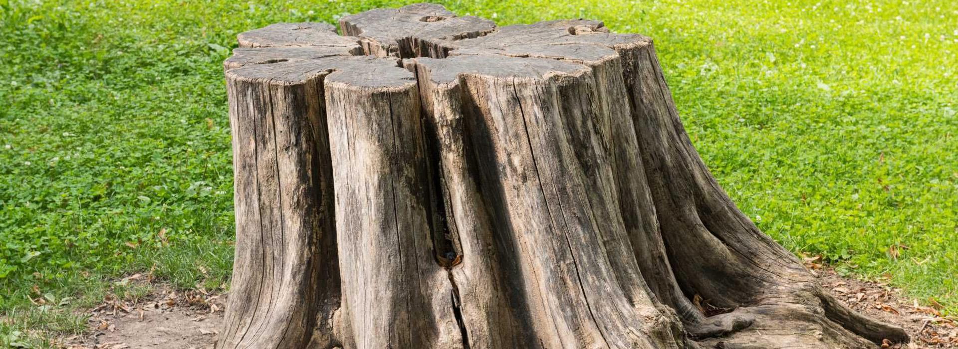 Faites appel à des arboriculteurs certifiés